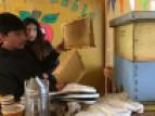 Education for Sustainable Development at the Lo Narváez Basic School, La Campana-Peñuelas Biosphere Reserve, Chile